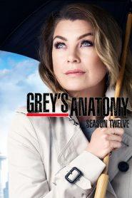 Grey's Anatomy: 12 Temporada